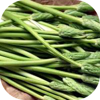 French Asparagus